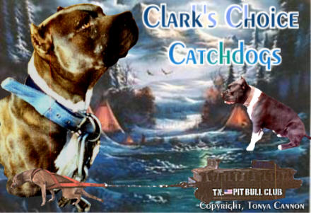 Clark's Choice Catchdogs